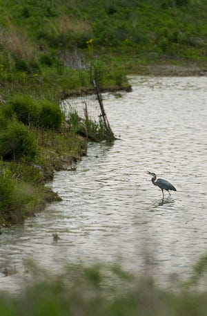 A view of a wetland area in 2009 at the 1,500-acre Fernald Preserve shows a bird in the Crosby Township area natural area that was a uranium production plant for nuclear weapons from 1952 to 1989.