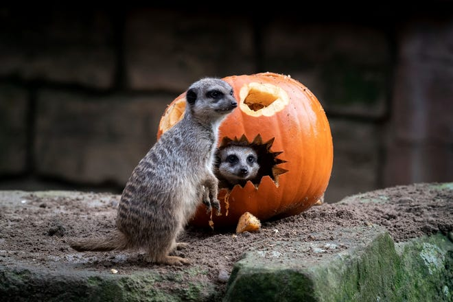 "Kids get treats instead of tricks or scares at ""Zoo Boo,"" an annual family-friendly Halloween event at the Detroit Zoo."
