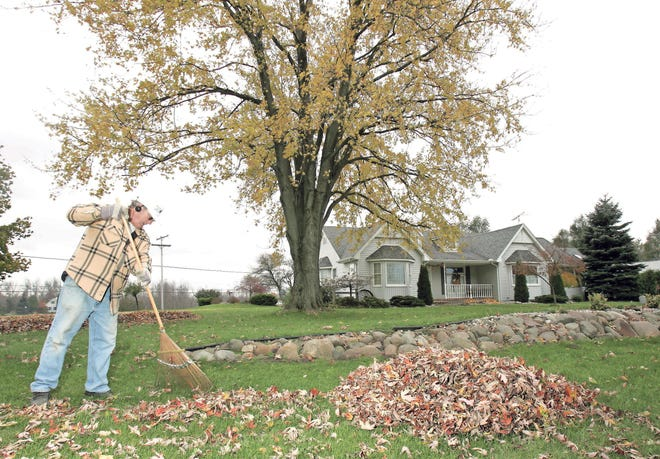 If you have access to leaves and can shred them, you can dust them on the surface of the soil after fall cleanup as a soil enrichment.