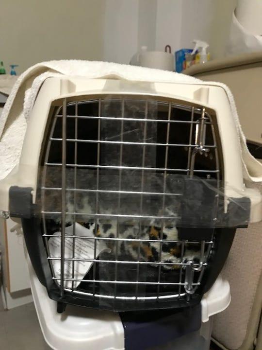 Kittens were left outside the Ramapo-Bergen Animal Refuge