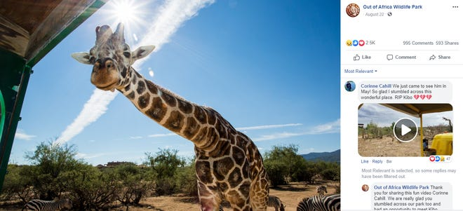 Kibo, a giraffe at Out of Africa, died in 2018.