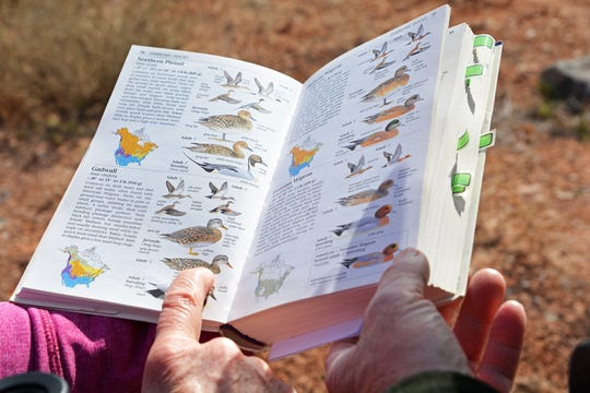 An Audubon book, used during the St. George Winter Bird Festival, helps watchers identify birds at a pond in Washington in this Spectrum file photo.