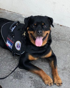 Gunther, a therapy dog from Blackwood, was nationally recognized for his work with handler John Hunt, owner of Crisis Response Canines.