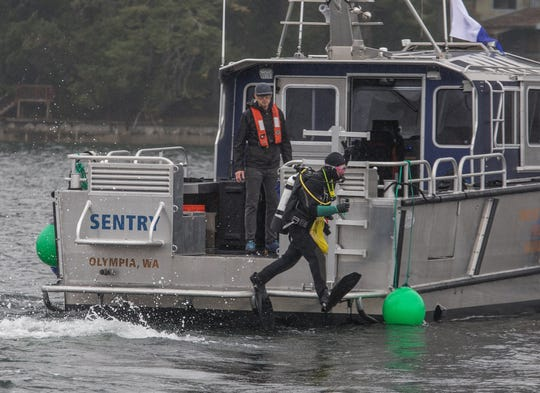 Department of Natural Resources divers enter the water during a compliance dive in Eld Inlet, checking on the progress of geoduck harvesters working on state public tidelands October 21, 2019. (Steve Ringman/Seattle Times/TNS)