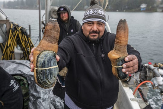 Geoduck diver Walter Lorentz Jr., of Lacey, Wash., shows a couple of geoducks he just harvested in Eld Inlet near Olympia, on public tidelands on October 21, 2019. Chinese tariffs have slashed prices for the giant clam. (Steve Ringman/Seattle Times/TNS)