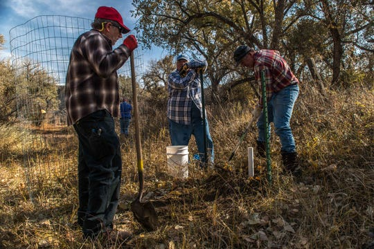 John McEwen, David Gans and Steve Berkram work together to plant a cottonwood. Berkam, in the blue flannel, has been at every cottonwood planting since 2013.