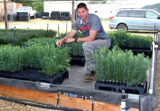 Owen Burney, New Mexico State University associate professor and superintendent at the John T. Harrington Forest Research Center at Mora inspects ponderosa pine seedlings being watered by the sub-irrigation greenhouse system.