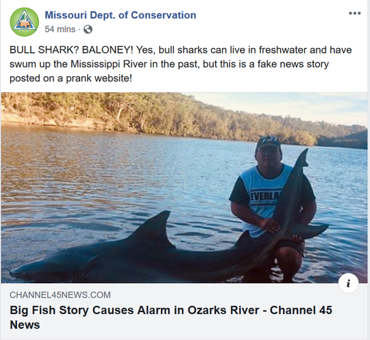 Thew Missouri Department of Conservation says this photo of a bull shark allegedly caught in Missouri is from a fake news website.