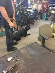 A St. Cloud police K-9 waits for instructions during a demonstration at the Metro Citizens Police Academy.