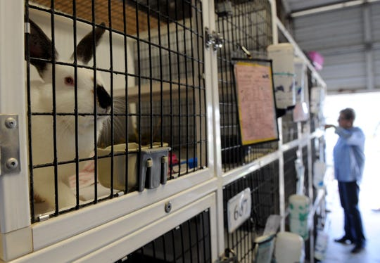 Jackie Rose, the director of the Ventura County Animal Services agency, visits the rabbit cages. Rose was named director in March.