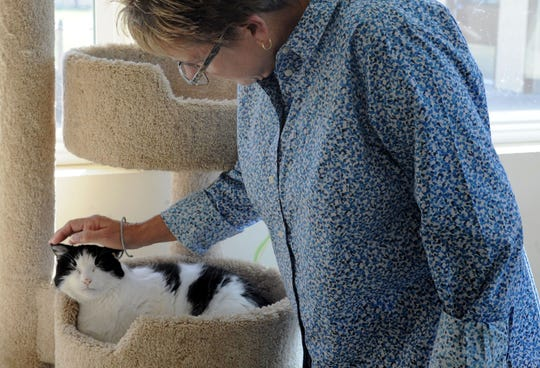 Jackie Rose, the director of the Ventura County Animal Services agency, pets Ashley the cat. Rose was named director in March.