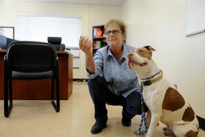 Jackie Rose, the director of the Ventura County Animal Services agency, waits for a treat to give to Chico inside her office. Rose has some other big challenges: building a new shelter and dealing with new contracts between the shelter and most of the cities in the county.