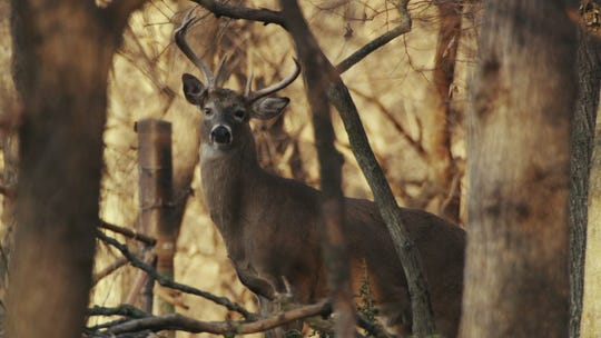Arkansas hunter dies after deer he shot got back up and attacked him, officials say