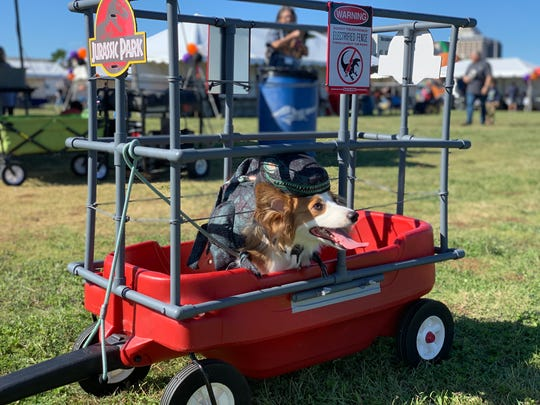 "Einstein, a one-year-old corgi, poses as a velociraptor from the movie ""Jurassic Park"" at the Thomas J. Henry's eighth annual Bark in the Park at Water's Edge Park on Saturday, Oct. 26, 2019."