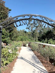 A wrought-iron arch crafted by Dr. Charlton Prather enhances the entrance to the Cancer Center Healing Garden.