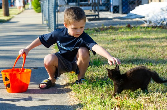 Forrest Nichols, 6, of Henderson pets a stray black cat along the route of the Community Trunk or Treat Halloween Extravaganza in Henderson Sunday afternoon.