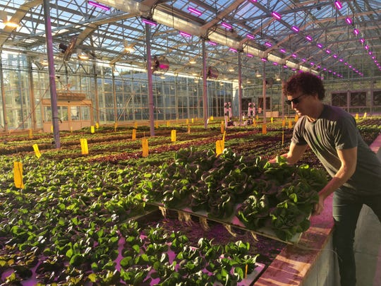 Jeffrey Orkin, owner of Greener Roots, is also in charge of hydroponics operations at Southall Farms.