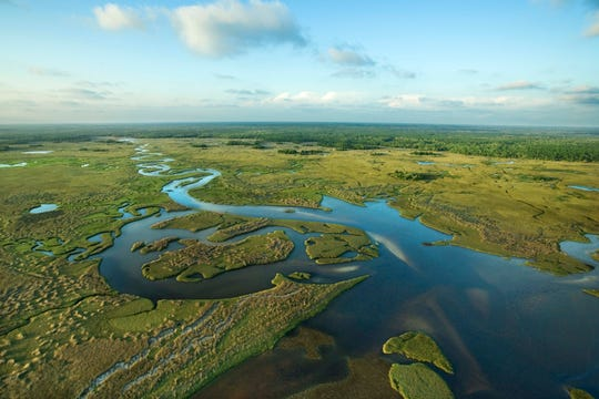 """Nicknamed the """"river of grass"""" due to Lake Okeechobee overflows during the wet season releasing water into a very slow moving shallow river dominated by sawgrass marsh."""
