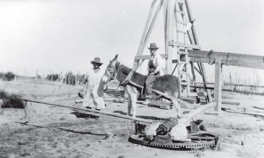 Burro drawing water at the Tucker ranch, circa 1930.