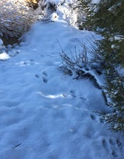 Animal tracks are seen in snow south of Farmington on Oct. 28.