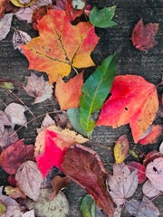 A collection of colorful fall leaves lie on a sidewalk