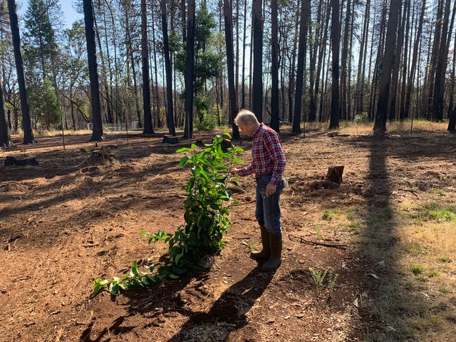 Jerry Rozycki escaped the Camp Fire in 2018 by car. He was surprised to find his house survived the fire, but has lamented the loss of his thickly forested yard. The only tree left on his property is an orange tree, which is considered more fire-safe than the Ponderosa pines that were once there. He estimates that by September 2019, he had spent at least $15,000 on tree removal.