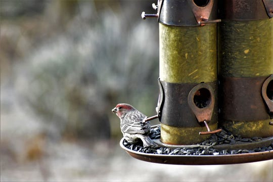 Feeding birds in winter gives them needed nutrition.