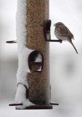 A bird eats from a snow covered bird feeder during a spring snow storm