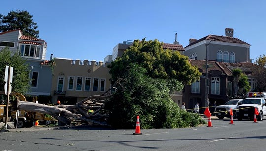 A massive tree, downed by ferocious winds that hit the Bay Area this weekend, lies on its side in San Francisco's Marina District. Although this city has power, nearly 3 million Californians up and down the state do not, leaving some to wonder if this is the new normal for the state's 40 million residents.