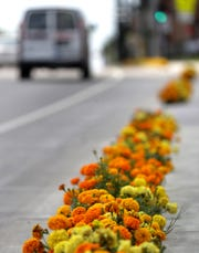 The Marigold Mile is planted every year on South Oneida Street.