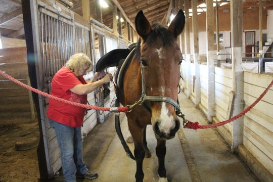 Lee Carrington, Riders Unlimited's  administrative assistant, gets Brandy, one of the organization's horses, ready for an equine therapy session Monday at the group's Carroll Township facility. Carrington said Riders Unlimited gets its hay donated by a Fremont farmer. She has heard of other residents with horses or cows that have struggled to find hay to feed their animals.