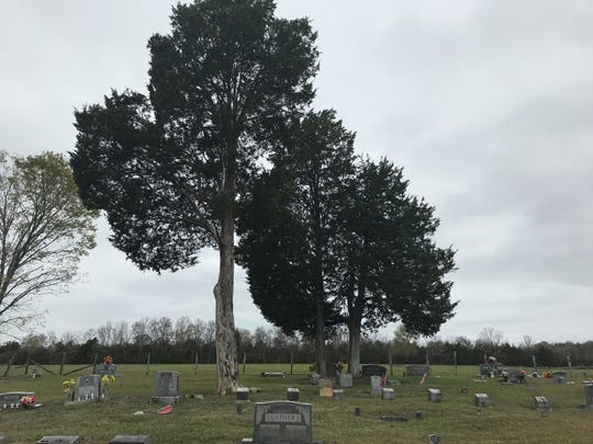 Dyer Cemetery is said to be haunted, with urban legend saying that three women accused of witchcraft were hanged from the cedar tree.