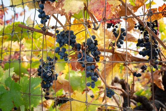 October marks not only fire season in California but also the peak of the grape harvest. As wildfires grow more frequent, so do concerns for field workers, who can face conditions that can jeopardize their health