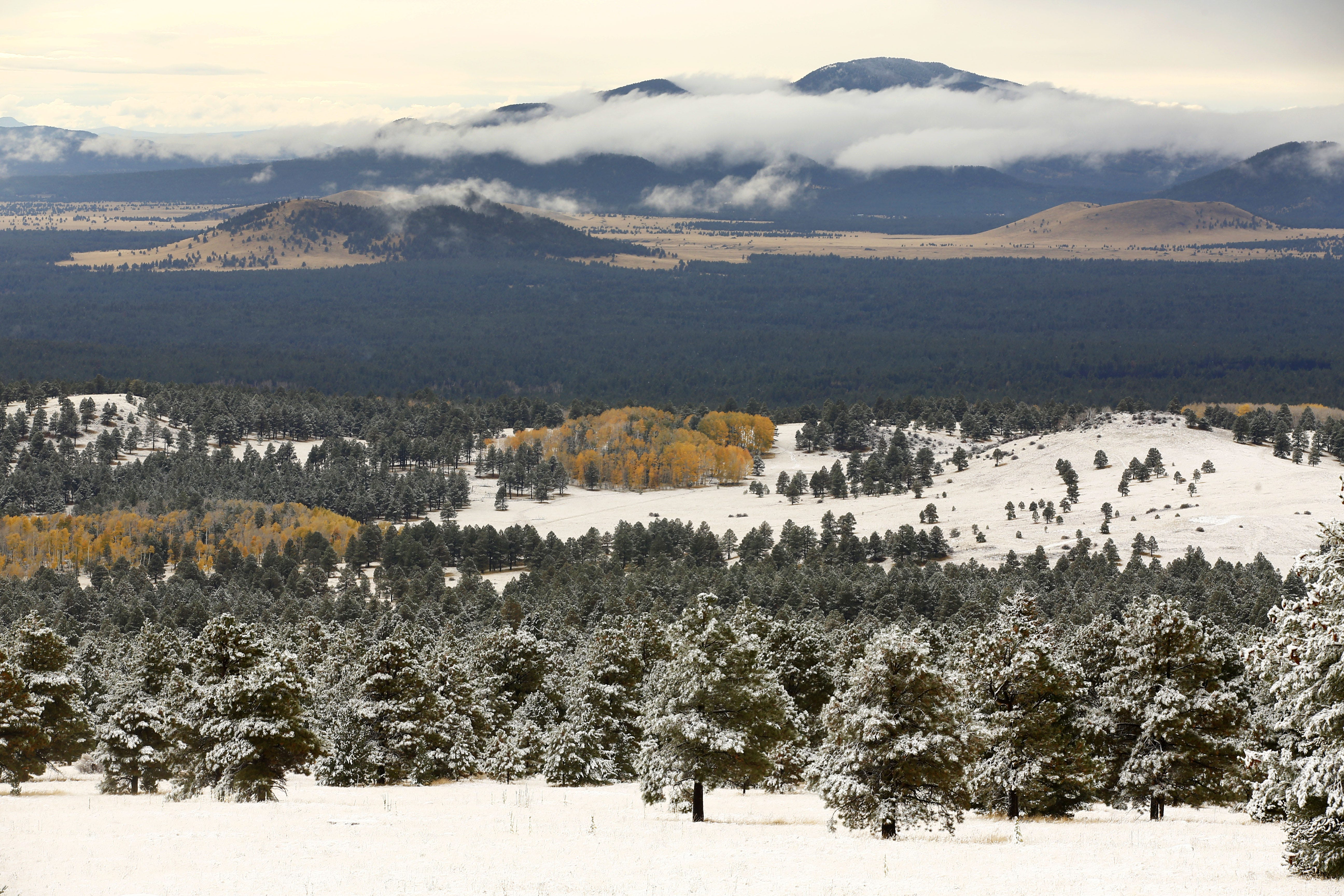 Tribes raise alarms about proposed 'memorial forest' near San Francisco Peaks