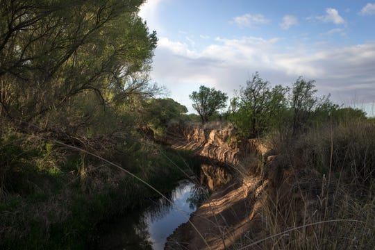 The San Pedro River winds through the San Pedro Riparian National Conservation Area near Sierra Vista.
