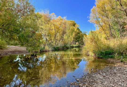 The Verde River flows through Dead Horse Ranch State Park, providing habitat for wildlife and boating and fishing opportunities for visitors.