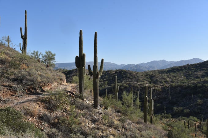 View of the Cave Creek Mountains from Go John Trail in Cave Creek Regional Park.
