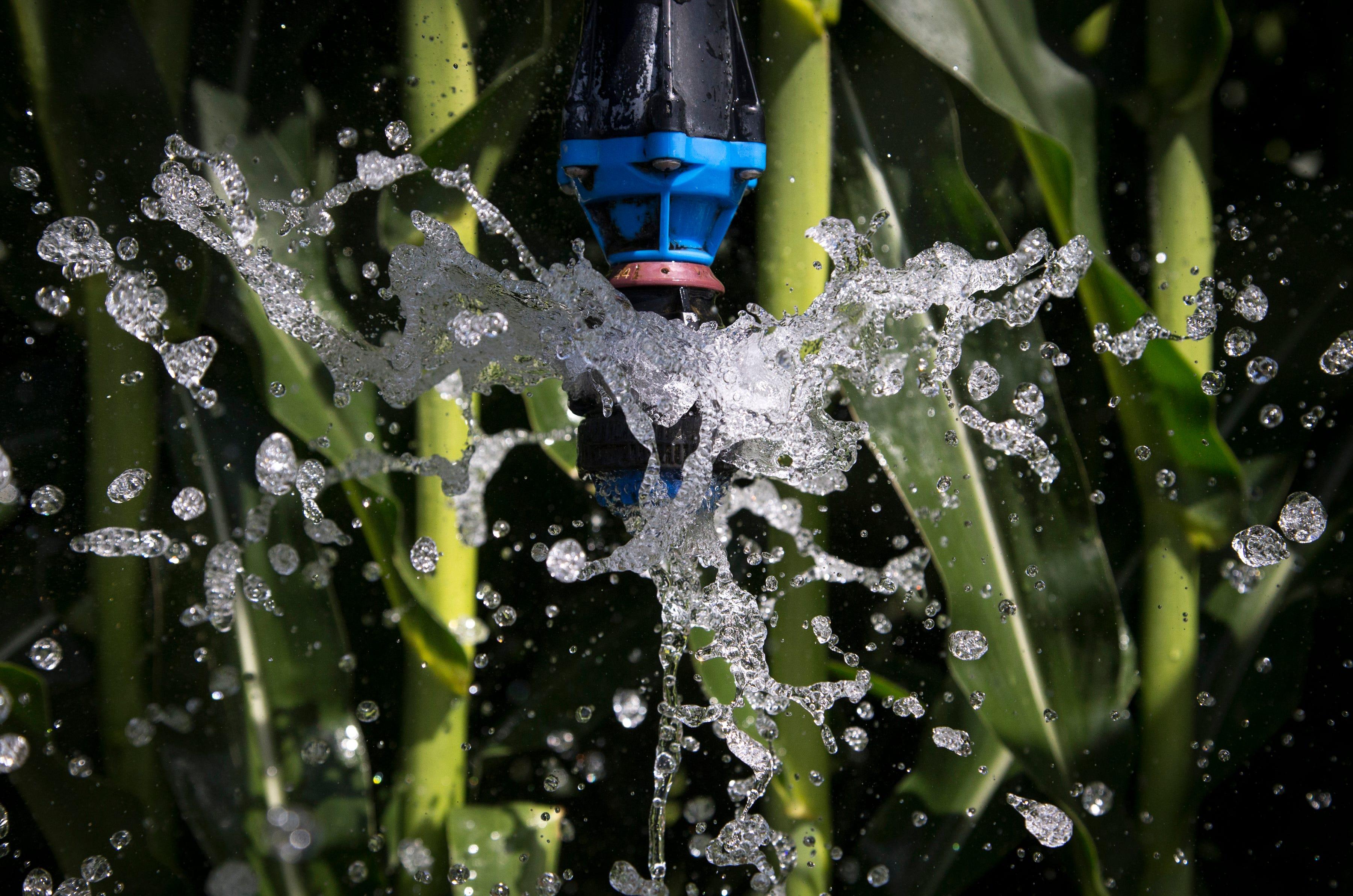 Irrigating corn, August 15, 2019, at Wagon Wheel Farms, Kansas Settlement, Arizona.