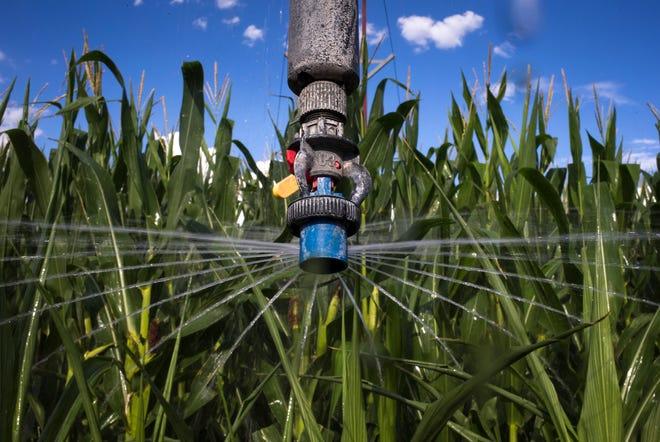 Irrigating corn, Aug. 15, 2019, Kansas Settlement, Arizona.