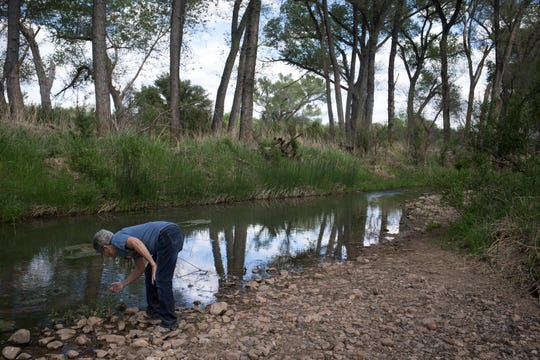 Activist Tricia Gerrodette examines a plant on the San Pedro River at the San Pedro Riparian National Conservation Area near Sierra Vista.