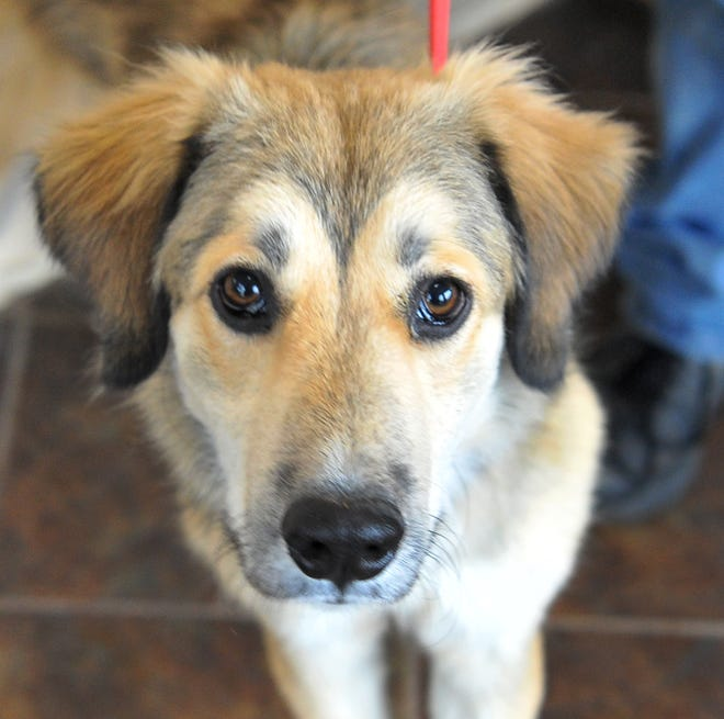 Say hello to Polly. She is an 11-month-old Collie/mix that is looking for her forever home. She is good with just about everybody, cats are questionable. You can find Polly and her friends at the Humane Society of Wichita County.