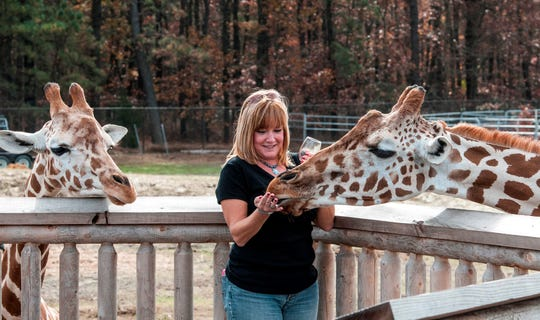 Grape Adventure festival-goers can feed the giraffes at Camp Aventura.