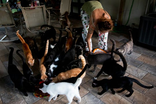 "Tammy Nemec feeds breakfast to her rescue cats at her home in North Fort Myers on Wednesday, October 30, 2019. Nemec spends hundreds of dollars a month on food, pellet litter, and vet bills, and says she gets occasional donations from people that want to support her work. ""God has given us just what we need, no more no less,"" she said."