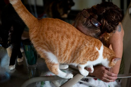 Tammy Nemec nuzzles one of her rescue cats at her home in North Fort Myers on Wednesday, October 30, 2019.