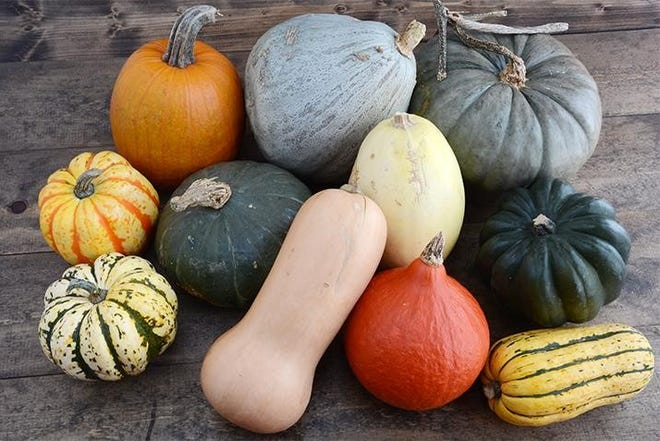 Winter squashes come in a wide variety of shapes, sizes colors and flavors.