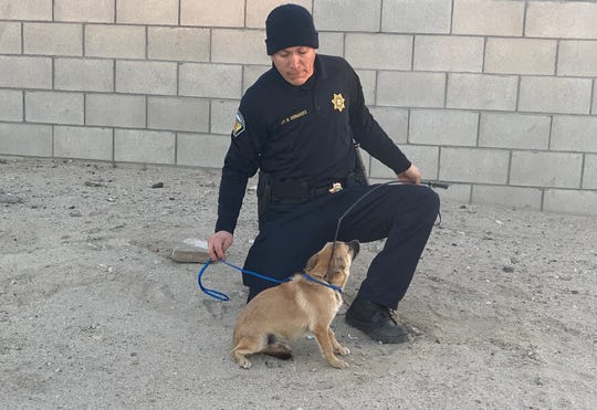 Riverside County animal services Sgt. Miguel Hernandez captures a roaming dog on Tuesday.