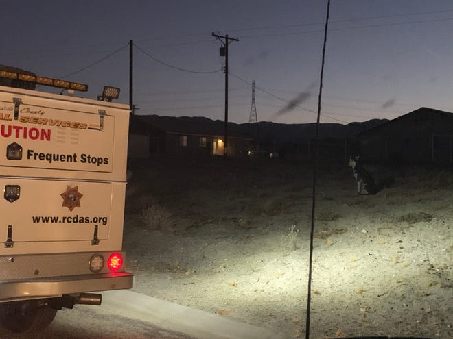 Riverside County animal control officers keep their eye on a stray dog. They rounded up 34 roaming dogs, including four large, aggressive dogs, on Tuesday.