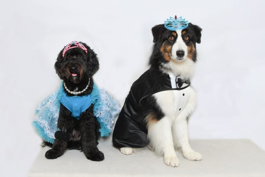 Schatzi and Luke, two dogs who participate in the Humane Society of the Treasure Coast's pet therapy program, show what it's like to be crowned queen and king. The HSTC Homecoming party on Nov. 16, 2019 will benefit the shelter's programs and animals and some of the therapy dogs will be on site to greet guests.