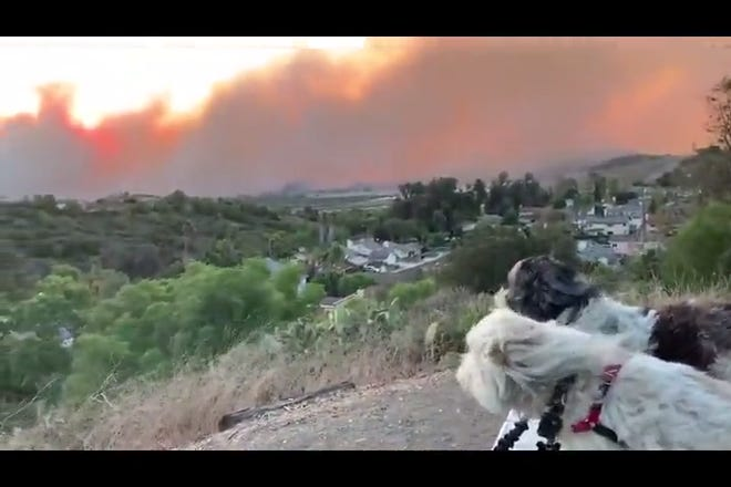 Dogs can be seen in the Moorpark Monte Vista Nature Park with the blazing Easy Fire in the background.