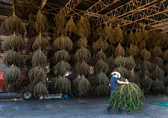 A Wisconsin official says the state's hemp program aligns very with the requirements that the federal rules are putting in place.